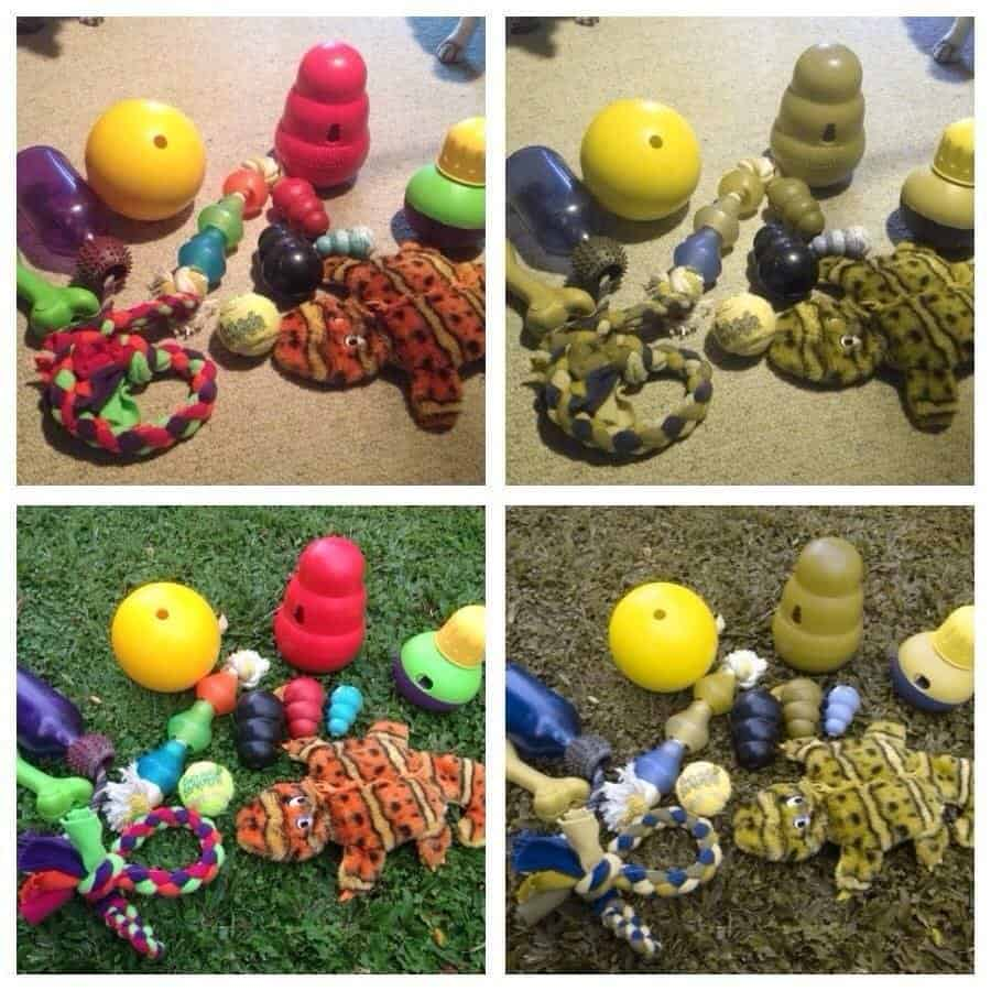 Two pictures of how dogs perceive the colors of their red, blue, yellow, and green toys